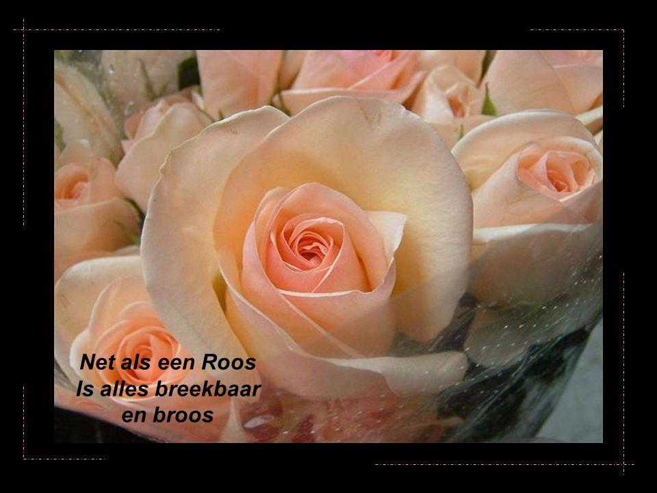 Net als een Roos Is alles breekbaar en broos