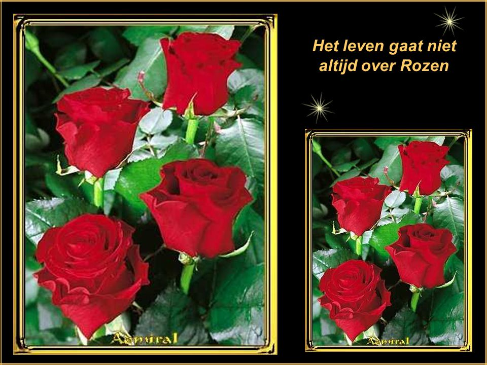 Citaten Over Rozen : Rozen en spreuken ppt download