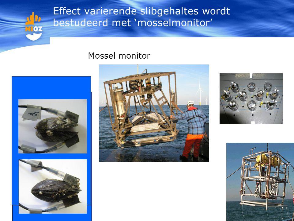 Effect varierende slibgehaltes wordt bestudeerd met 'mosselmonitor'