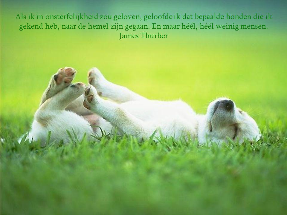 Als ik in onsterfelijkheid zou geloven, geloofde ik dat bepaalde honden die ik gekend heb, naar de hemel zijn gegaan.