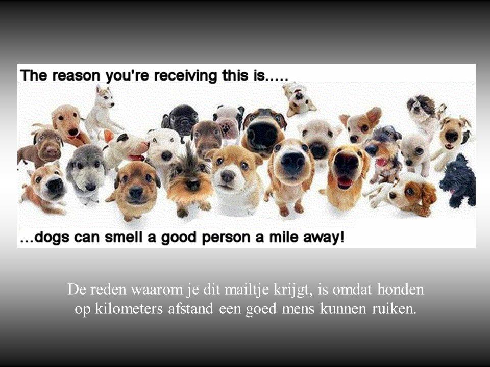 De reden waarom je dit mailtje krijgt, is omdat honden