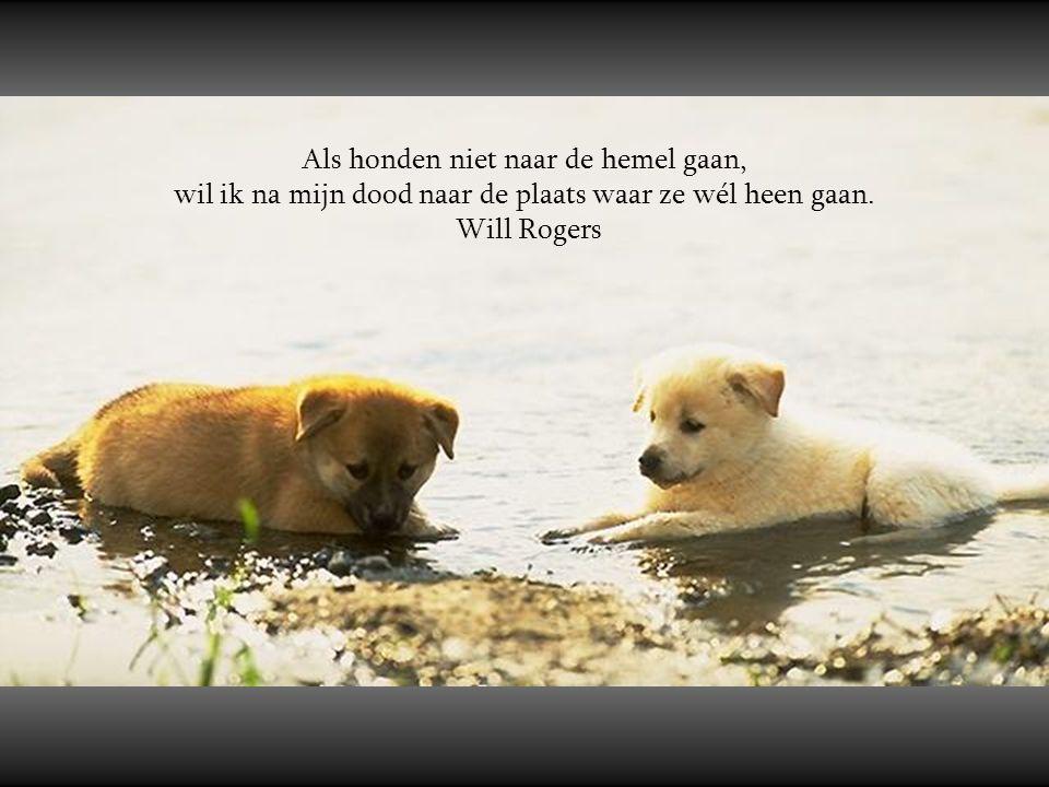 Als honden niet naar de hemel gaan,