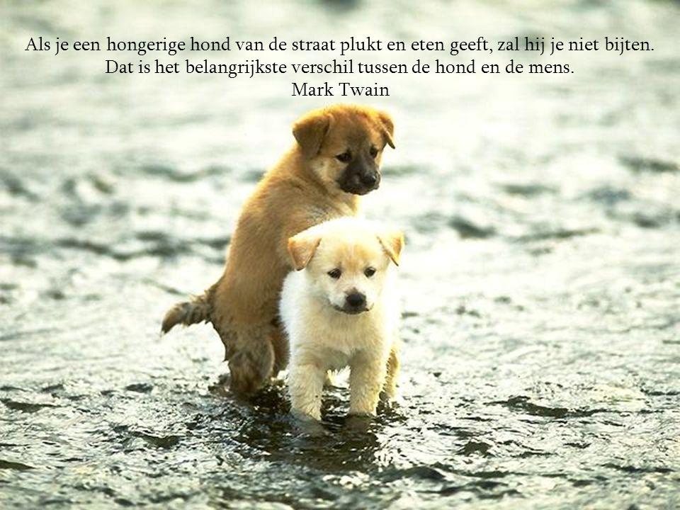 Dat is het belangrijkste verschil tussen de hond en de mens.