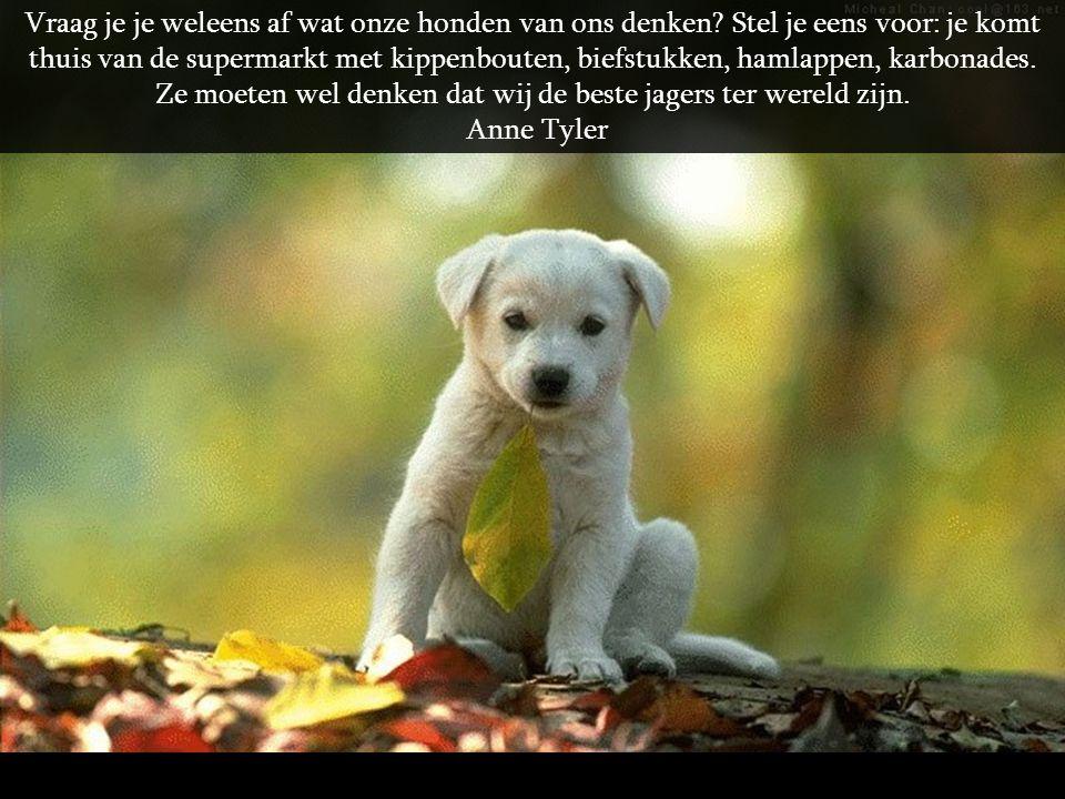 Vraag je je weleens af wat onze honden van ons denken