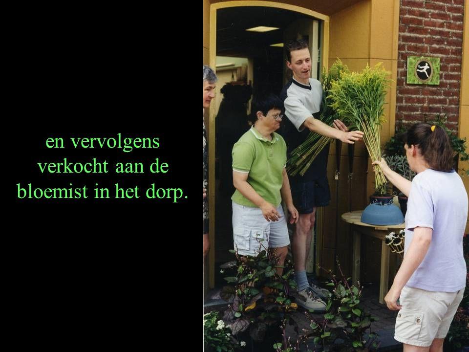 en vervolgens verkocht aan de bloemist in het dorp.