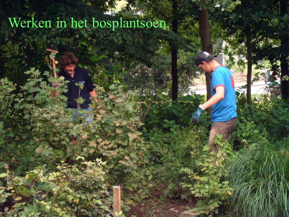 Werken in het bosplantsoen.