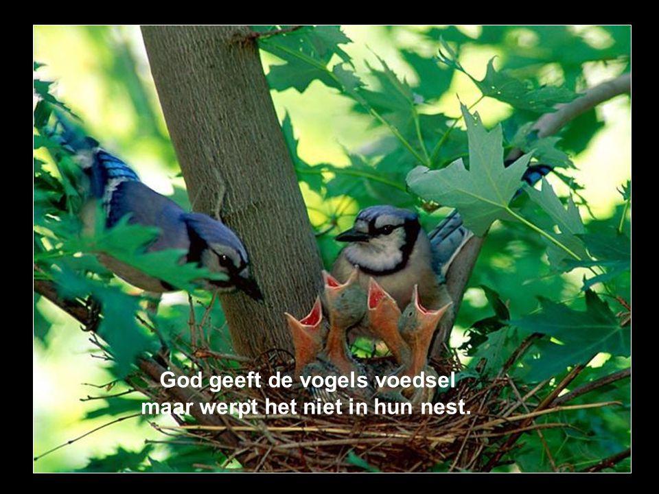 God geeft de vogels voedsel