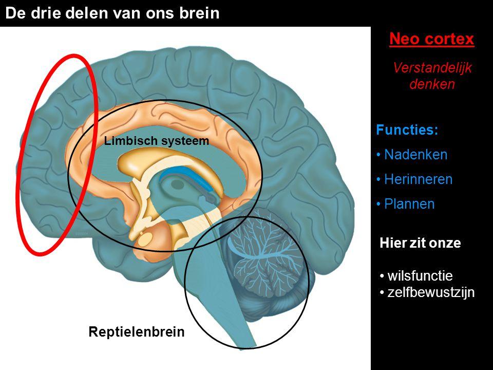 De drie delen van ons brein