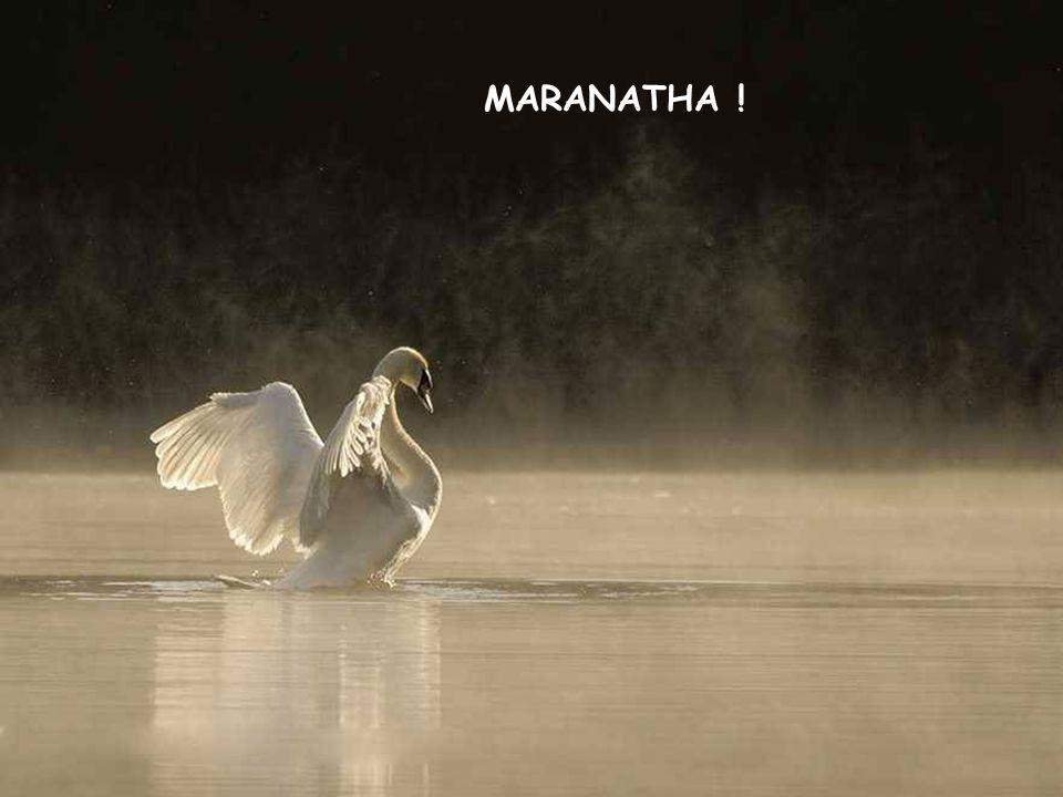 MARANATHA !