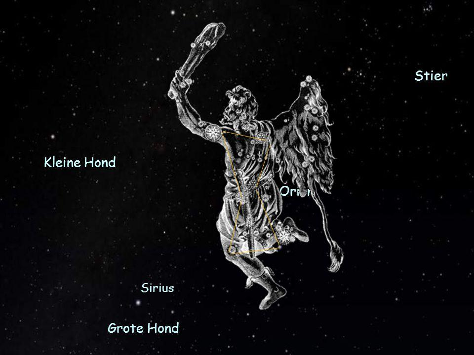 Stier Kleine Hond Orion Grote Hond Sirius