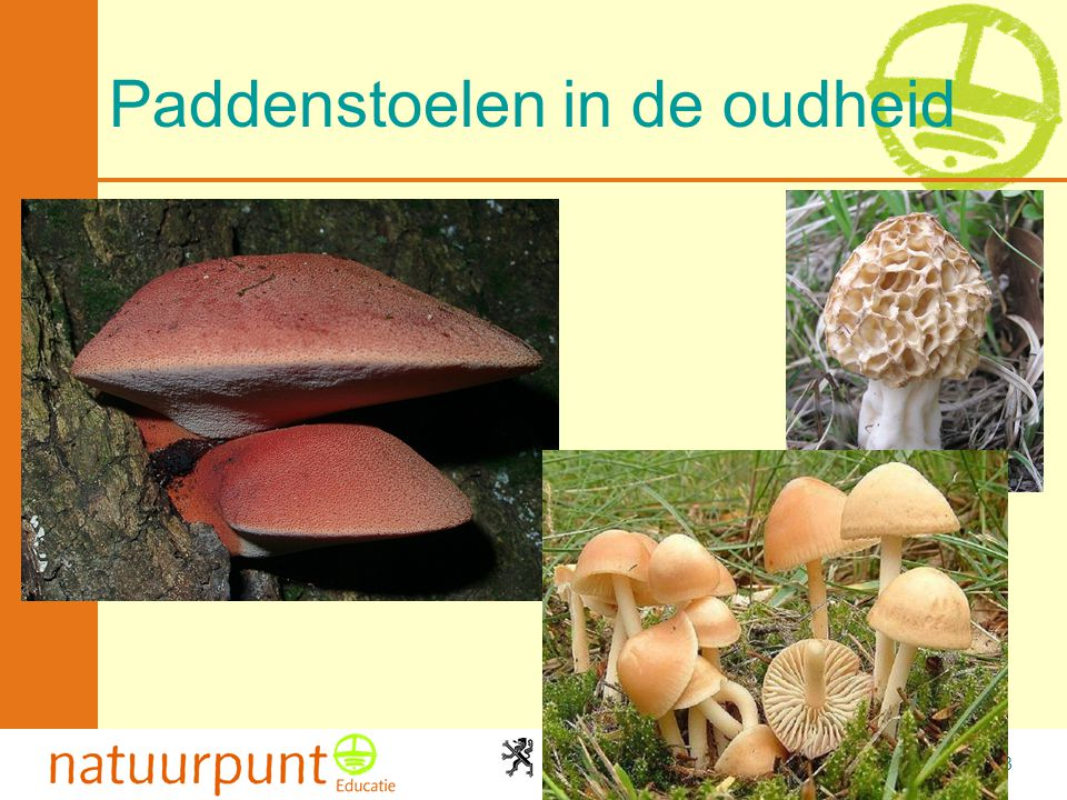 Paddenstoelen in de oudheid