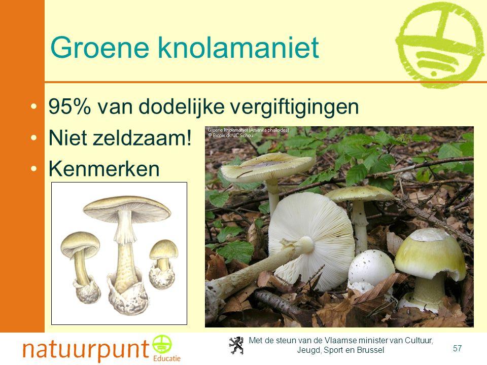 Groene knolamaniet 95% van dodelijke vergiftigingen Niet zeldzaam!