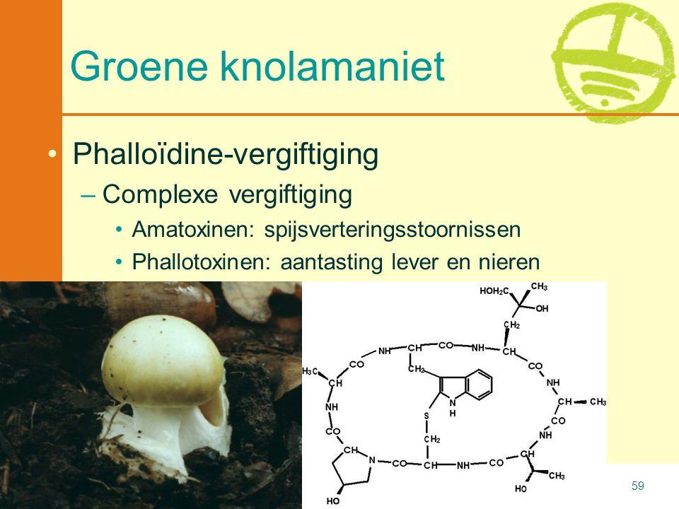 Groene knolamaniet Phalloïdine-vergiftiging Complexe vergiftiging