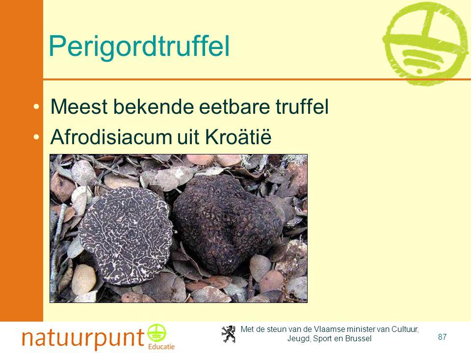Perigordtruffel Meest bekende eetbare truffel Afrodisiacum uit Kroätië