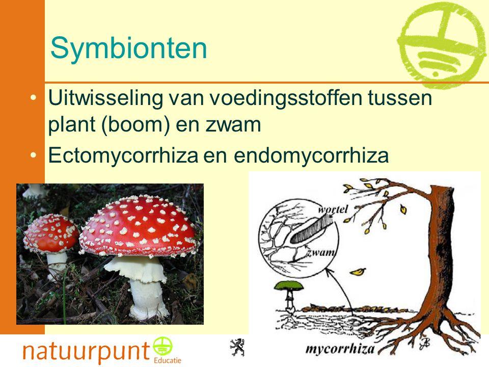 2-4-2017 Symbionten. Uitwisseling van voedingsstoffen tussen plant (boom) en zwam.