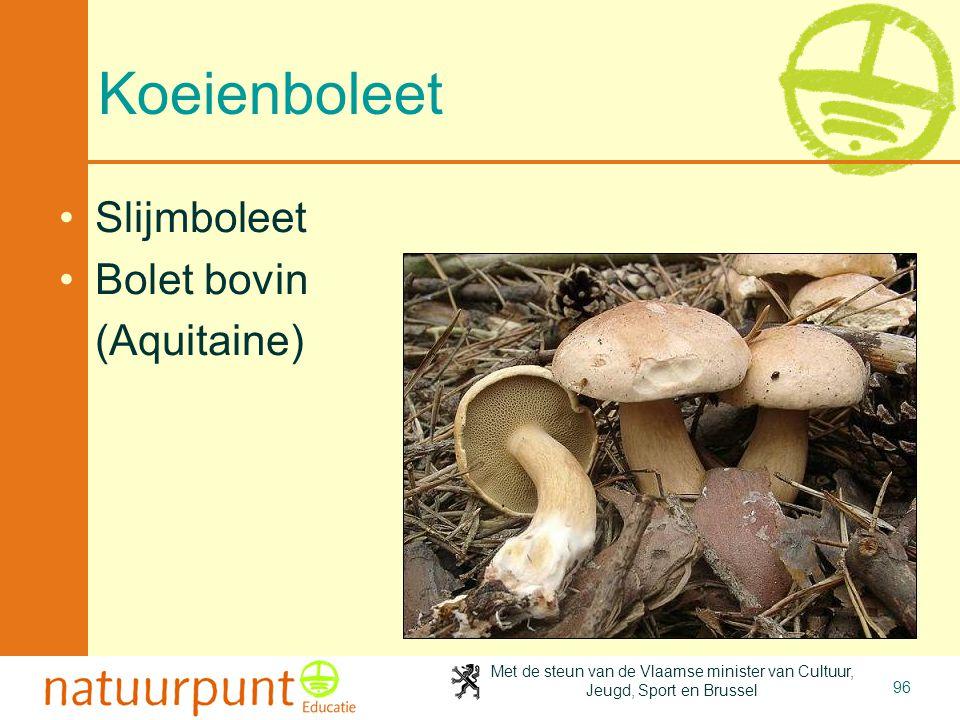 2-4-2017 Koeienboleet Slijmboleet Bolet bovin (Aquitaine)
