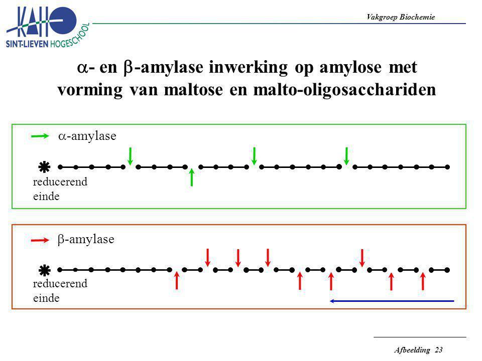 a- en b-amylase inwerking op amylose met vorming van maltose en malto-oligosacchariden