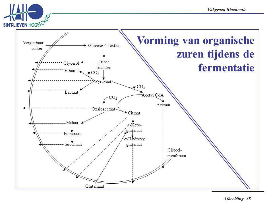 Vorming van organische zuren tijdens de fermentatie
