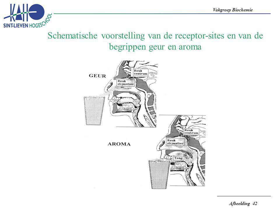 Schematische voorstelling van de receptor-sites en van de begrippen geur en aroma