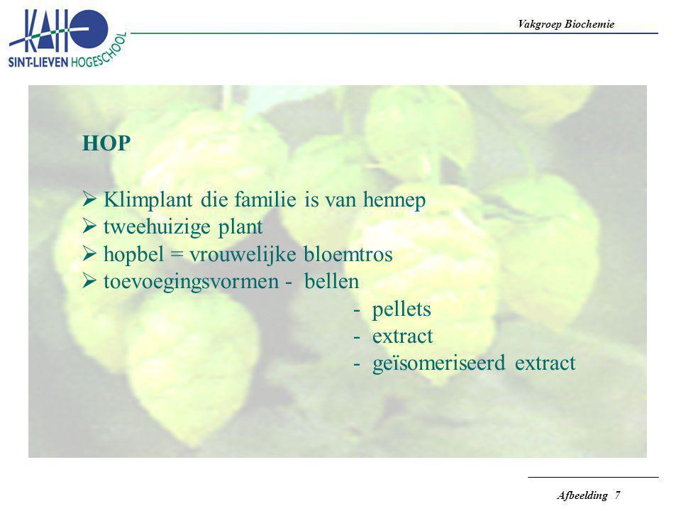 HOP Klimplant die familie is van hennep. tweehuizige plant. hopbel = vrouwelijke bloemtros. toevoegingsvormen - bellen.