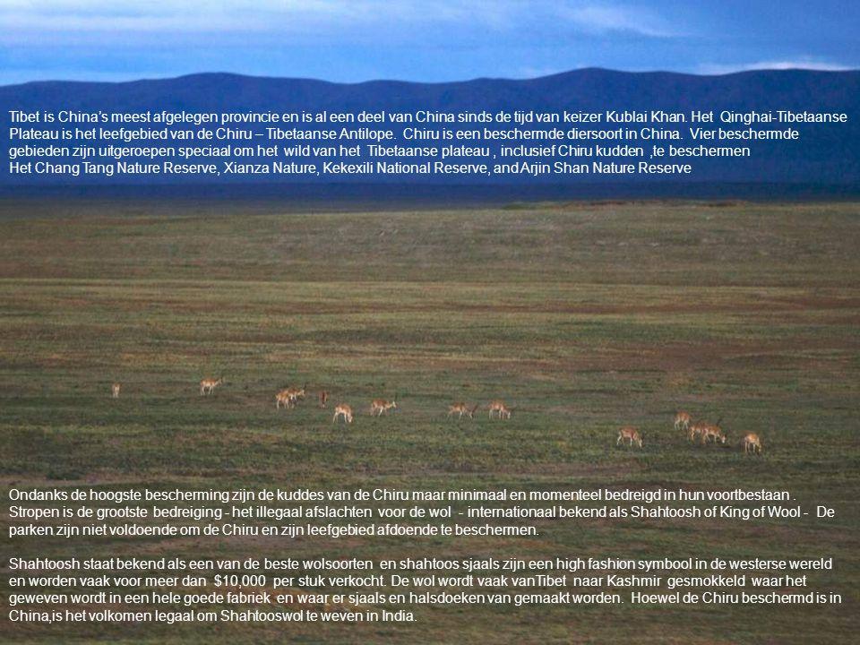 Tibet is China's meest afgelegen provincie en is al een deel van China sinds de tijd van keizer Kublai Khan. Het Qinghai-Tibetaanse Plateau is het leefgebied van de Chiru – Tibetaanse Antilope. Chiru is een beschermde diersoort in China. Vier beschermde gebieden zijn uitgeroepen speciaal om het wild van het Tibetaanse plateau , inclusief Chiru kudden ,te beschermen Het Chang Tang Nature Reserve, Xianza Nature, Kekexili National Reserve, and Arjin Shan Nature Reserve