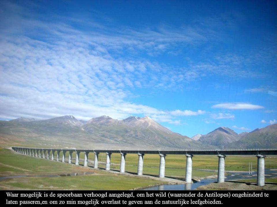 Waar mogelijk is de spoorbaan verhoogd aangelegd, om het wild (waaronder de Antilopes) ongehinderd te laten passeren,en om zo min mogelijk overlast te geven aan de natuurlijke leefgebieden.