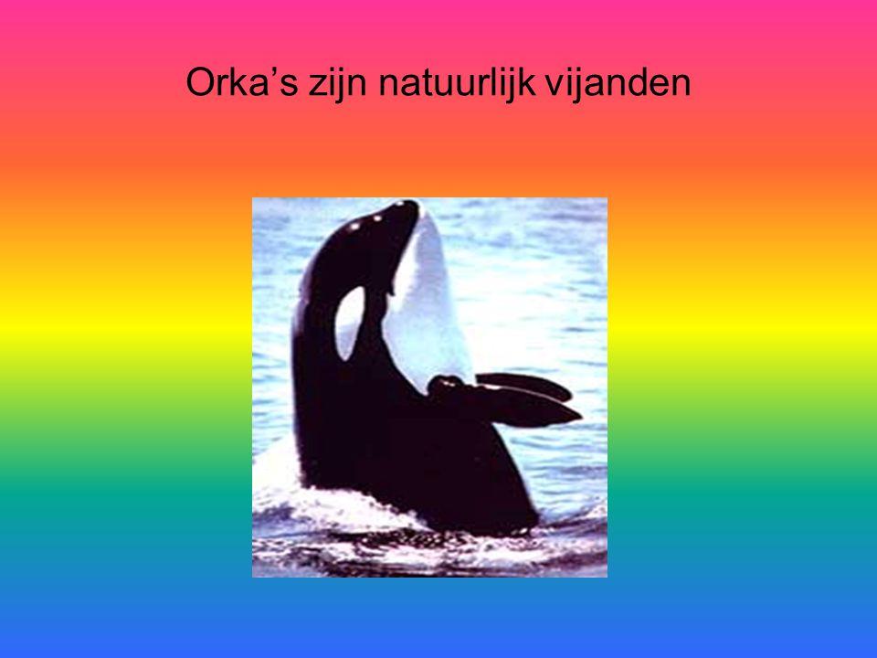 Orka's zijn natuurlijk vijanden