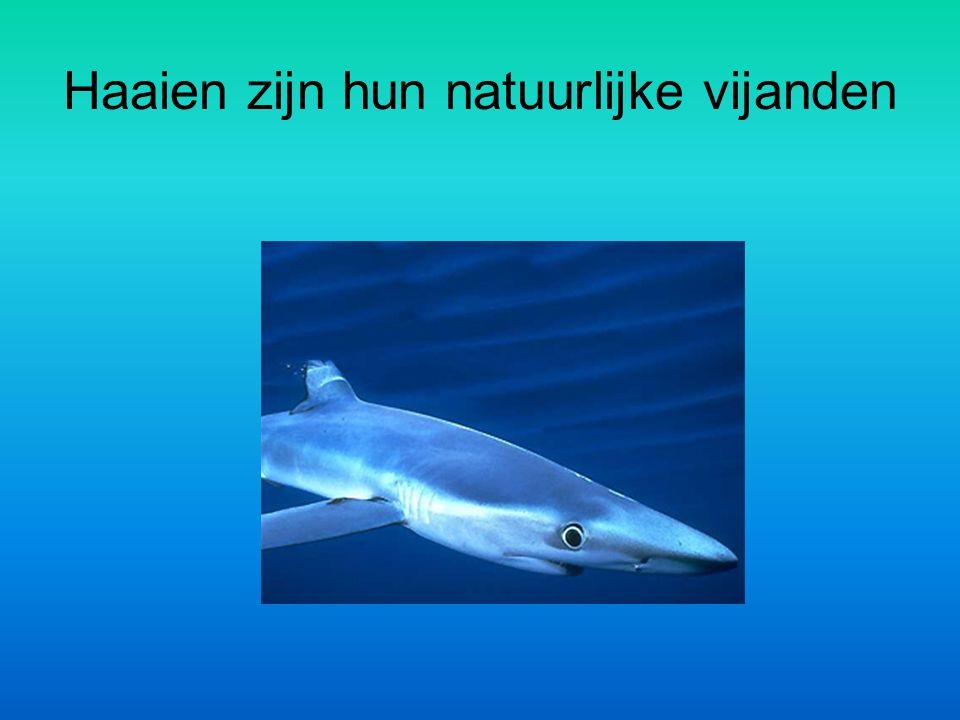 Haaien zijn hun natuurlijke vijanden