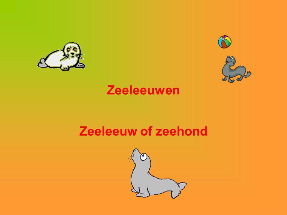 Zeeleeuwen Zeeleeuw of zeehond