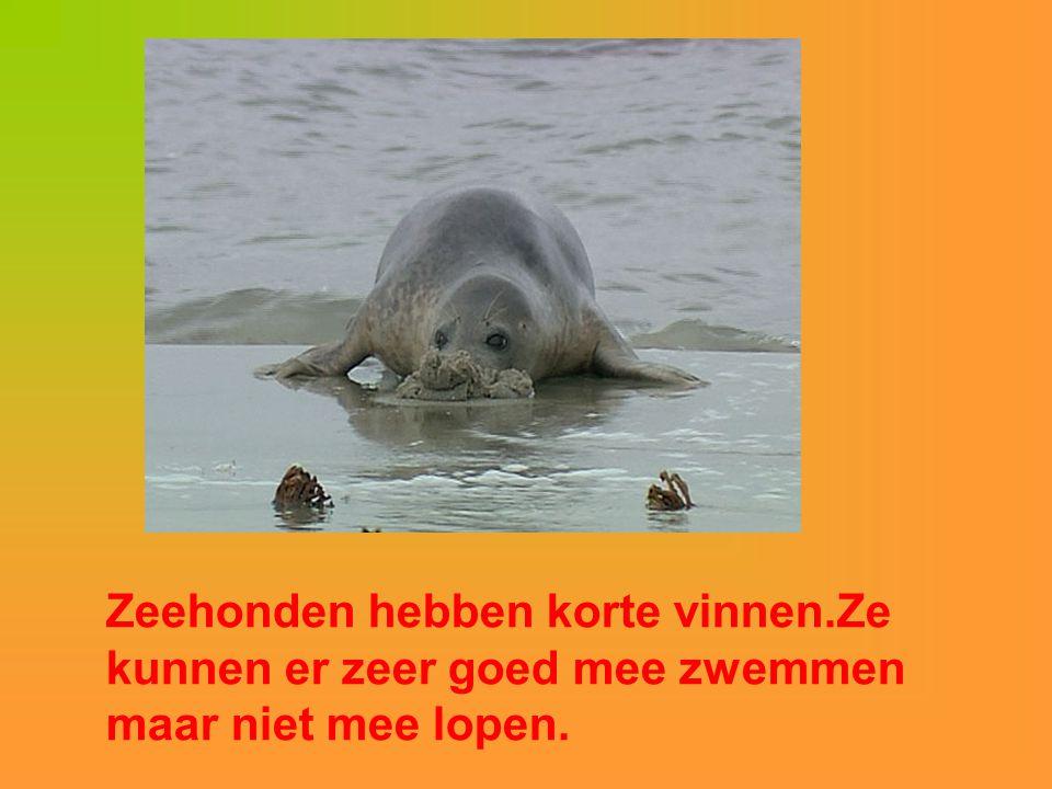 Zeehonden hebben korte vinnen