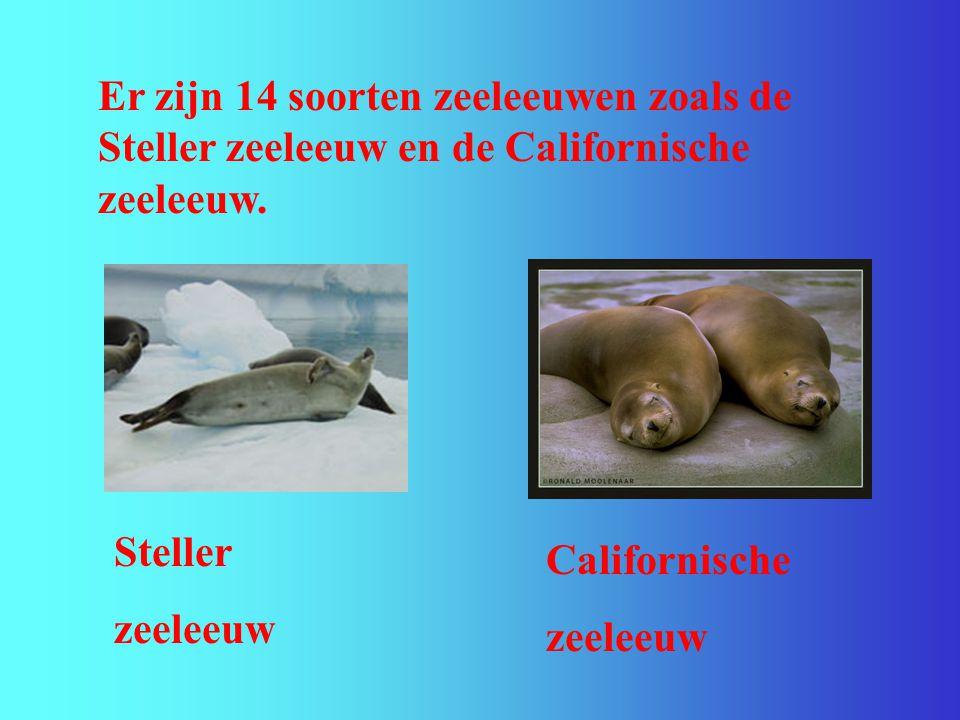 Er zijn 14 soorten zeeleeuwen zoals de Steller zeeleeuw en de Californische zeeleeuw.