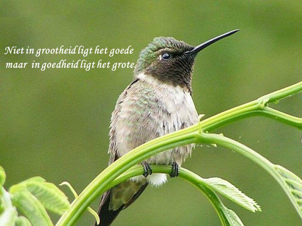 Niet in grootheid ligt het goede maar in goedheid ligt het grote.
