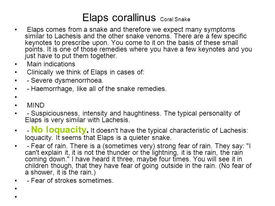 Elaps corallinus Coral Snake