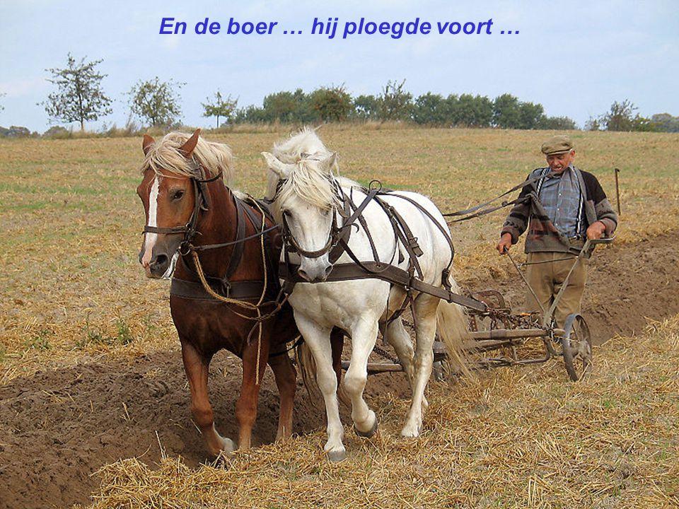 En de boer … hij ploegde voort …