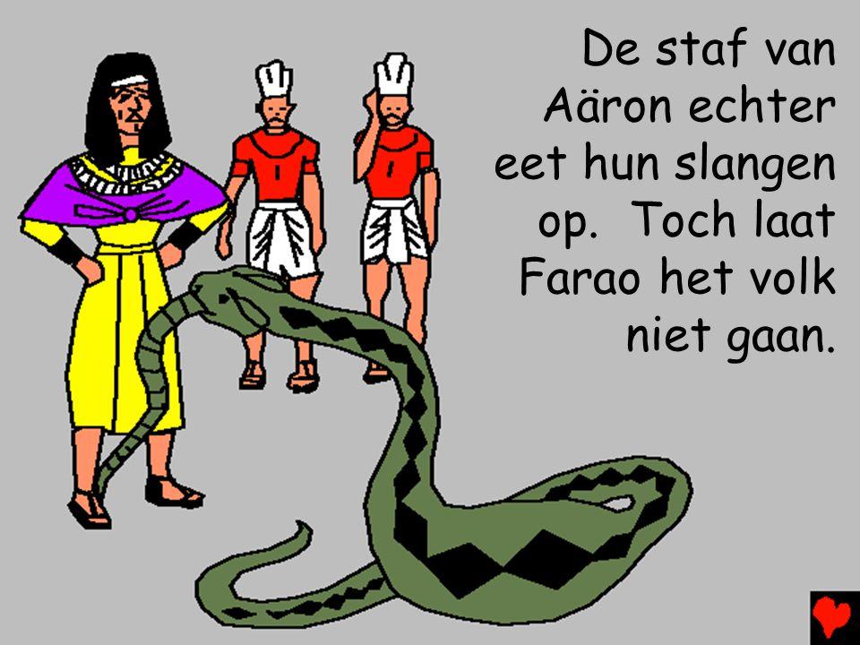 De staf van Aäron echter eet hun slangen op