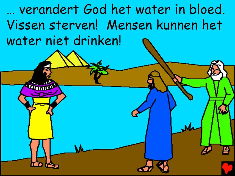 … verandert God het water in bloed. Vissen sterven