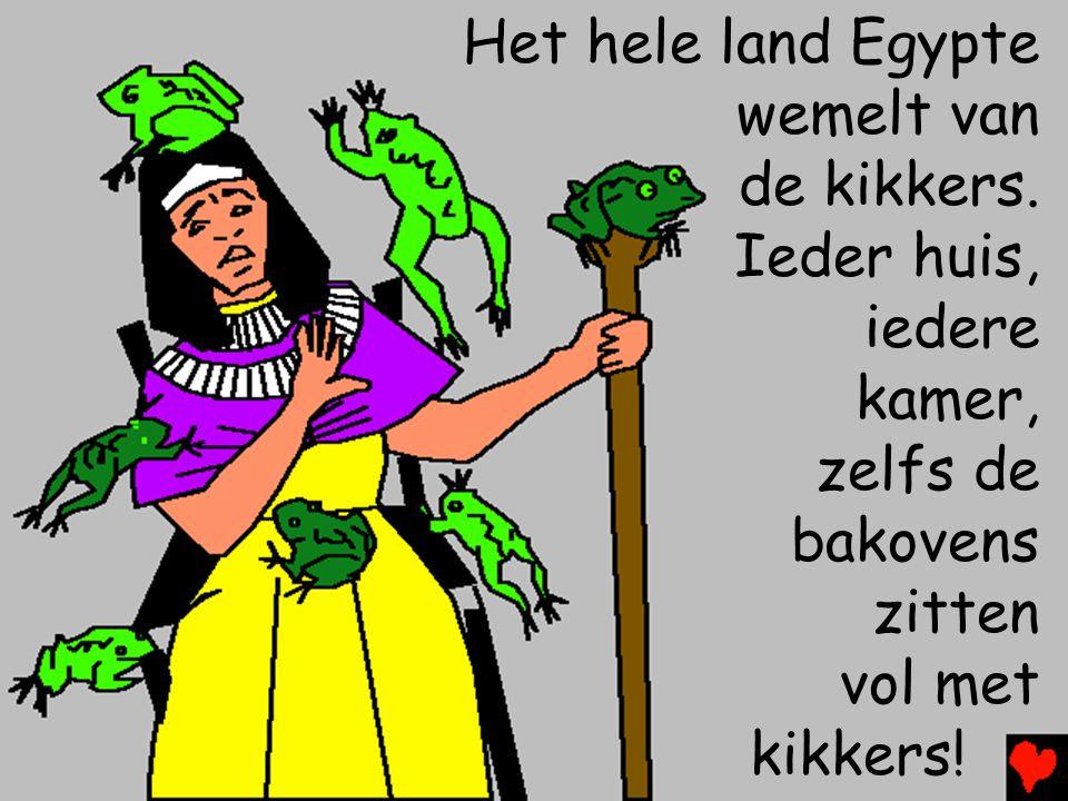 Het hele land Egypte wemelt van