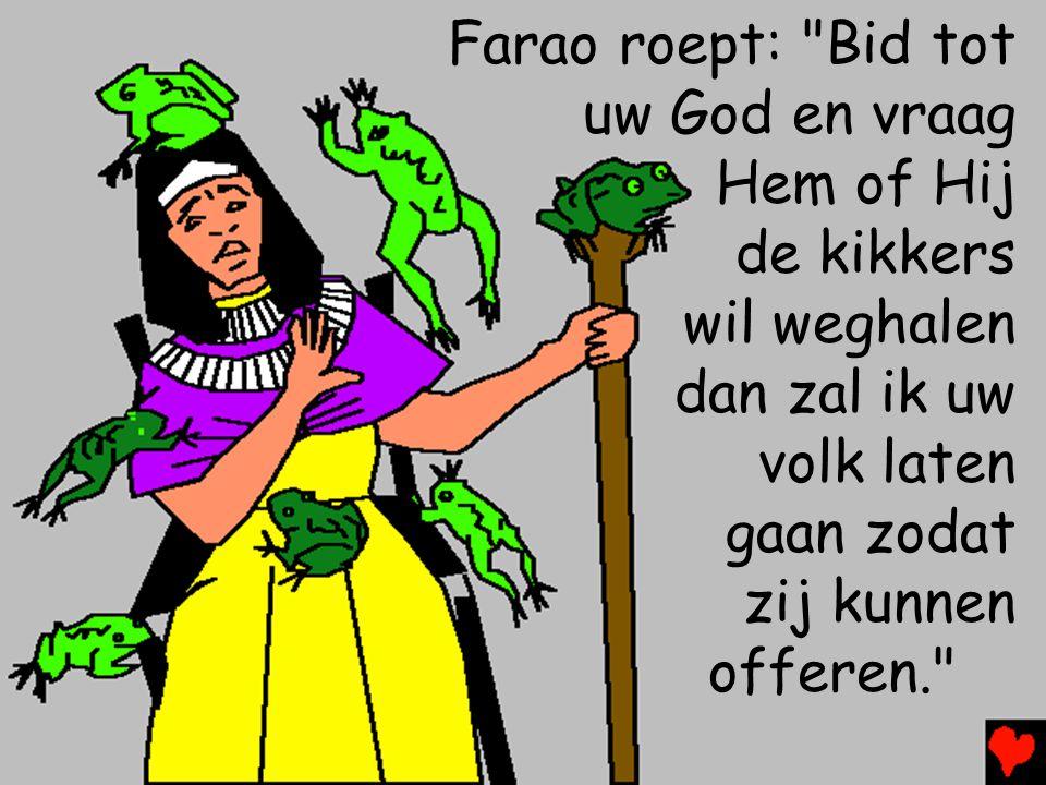 Farao roept: Bid tot uw God en vraag. Hem of Hij. de kikkers. wil weghalen. dan zal ik uw. volk laten.