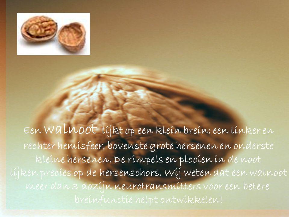 Een walnoot lijkt op een klein brein: een linker en