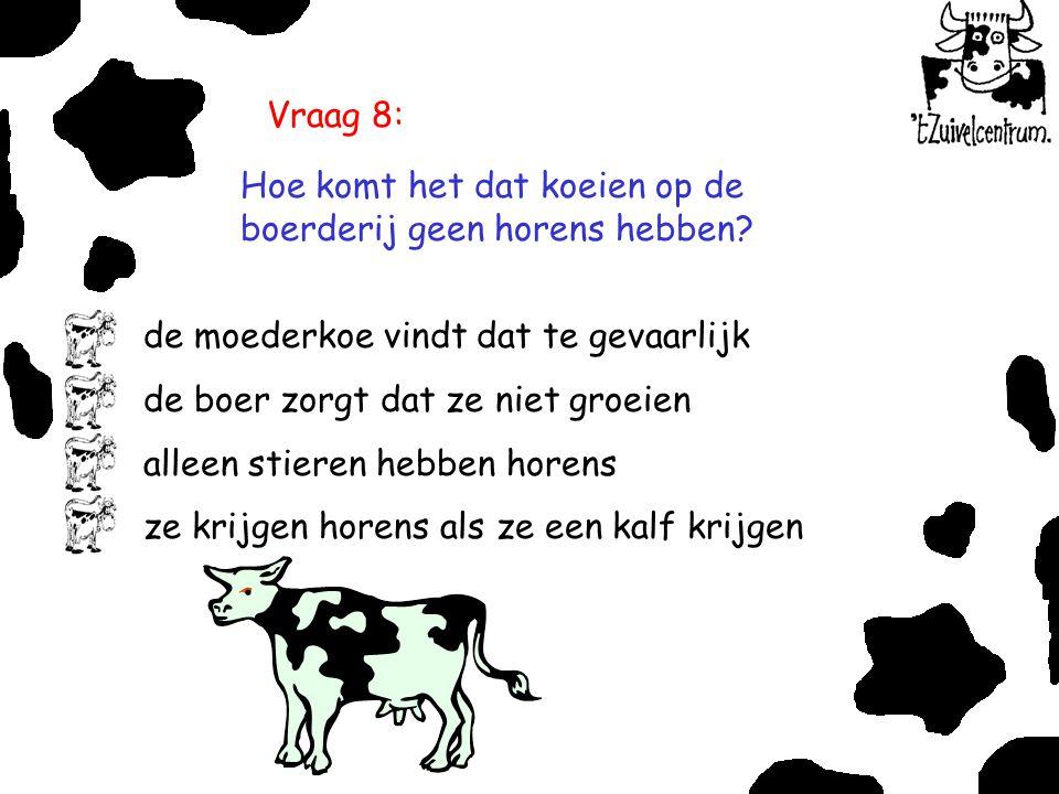 Vraag 8: Hoe komt het dat koeien op de boerderij geen horens hebben de moederkoe vindt dat te gevaarlijk.
