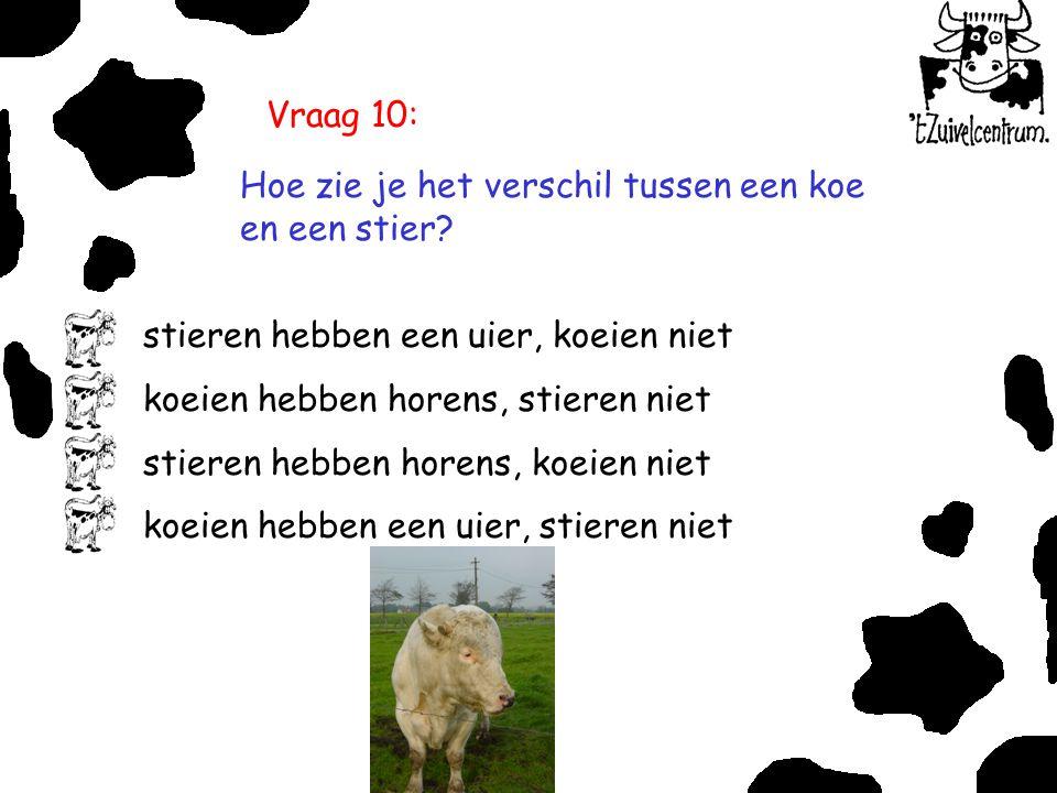 Vraag 10: Hoe zie je het verschil tussen een koe en een stier stieren hebben een uier, koeien niet.