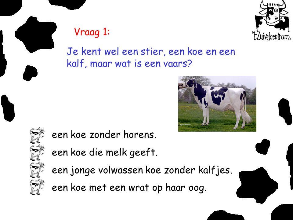 Vraag 1: Je kent wel een stier, een koe en een kalf, maar wat is een vaars een koe zonder horens.