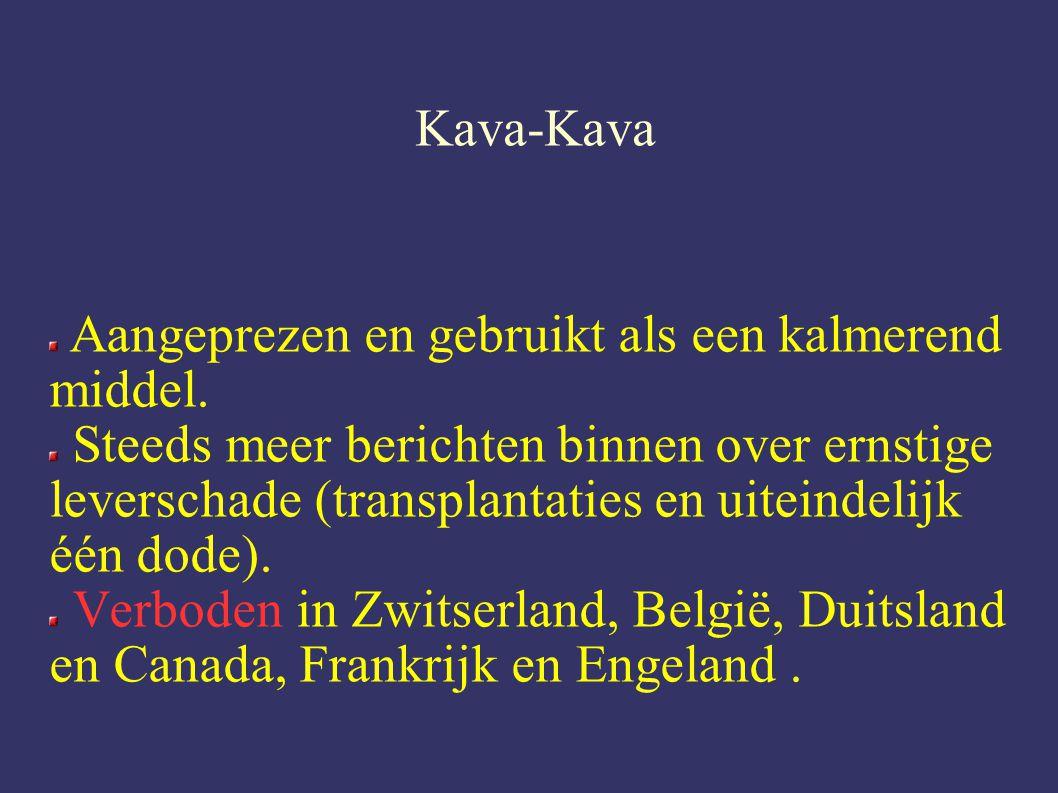 Kava-Kava Aangeprezen en gebruikt als een kalmerend middel.