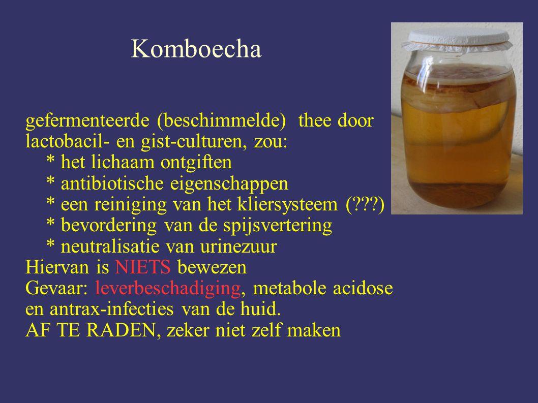 Komboecha gefermenteerde (beschimmelde) thee door lactobacil- en gist-culturen, zou: * het lichaam ontgiften.