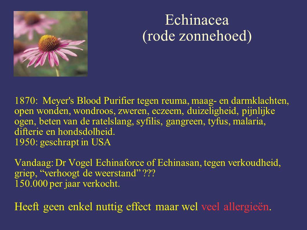 Echinacea (rode zonnehoed)