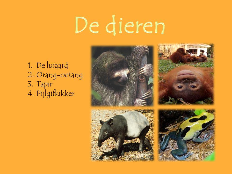 De dieren De luiaard Orang-oetang Tapir Pijlgifkikker