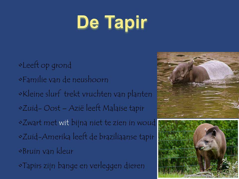 De Tapir Leeft op grond Familie van de neushoorn
