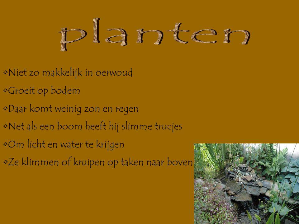 planten Niet zo makkelijk in oerwoud Groeit op bodem