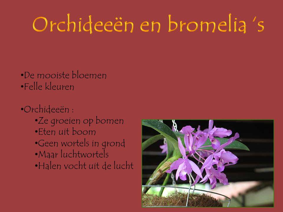 Orchideeën en bromelia 's