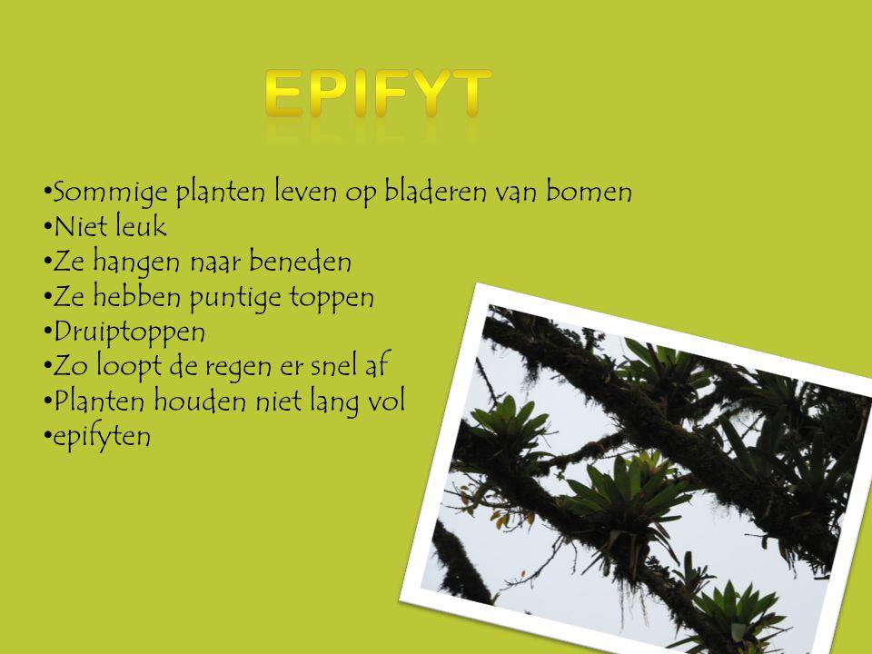 Epifyt Sommige planten leven op bladeren van bomen Niet leuk